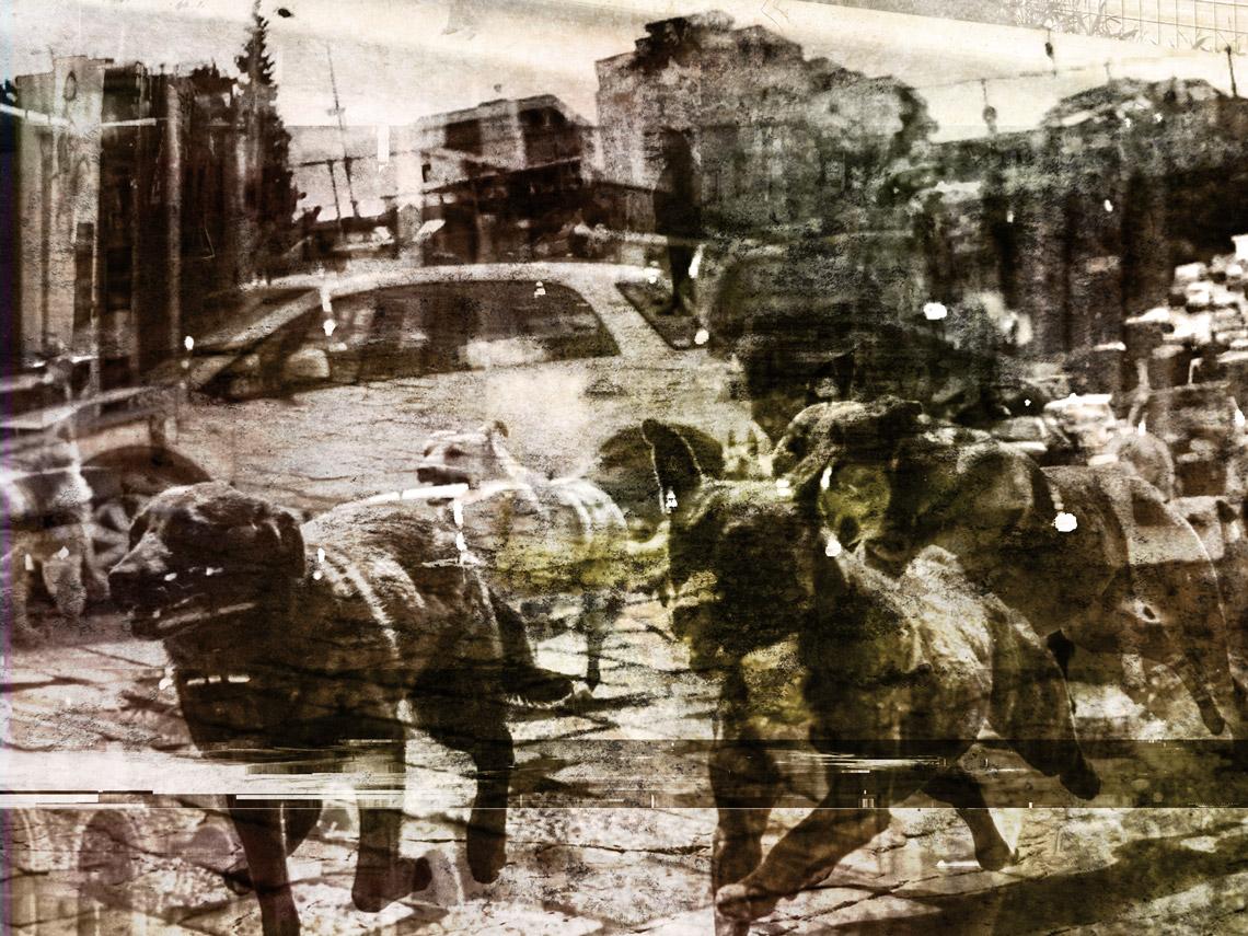 L'invasione dei cani a Palermo — Cap. II