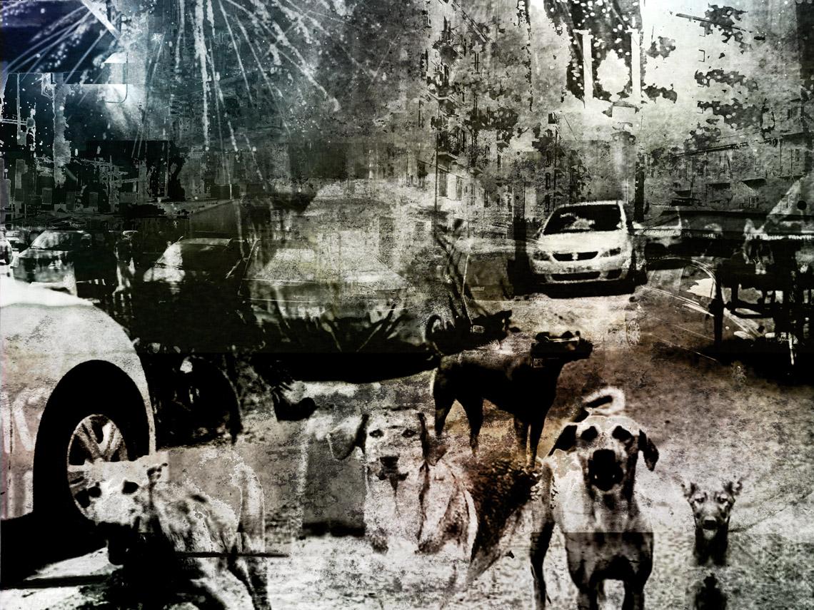 L'invasione dei cani a Palermo — Cap. X
